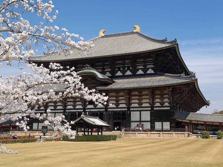 legno antisismico tempio giapponese